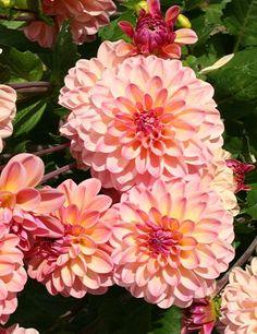 Garden Bulbs, Planting Bulbs, Fall Planting, Sun Garden, Fruit Garden, Vintage Gardening, Vintage Garden Decor, Petunia, Easy To Grow Bulbs