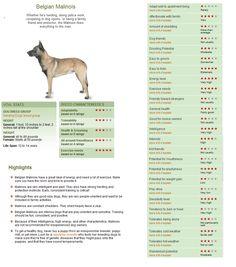 Belgian Malinois: http://dogtime.com/dog-breeds/belgian-malinois