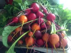 backyard raised bed beets - Google Search