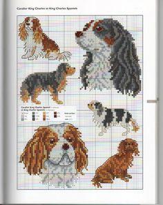 ♥D♥ 450 ENGLISH TOY COCKER SPANIEL PUPPY DESIGNER DOGS I