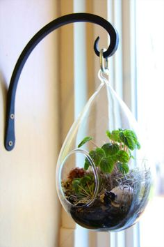 12 Days Of DIY: Holiday Terrarium