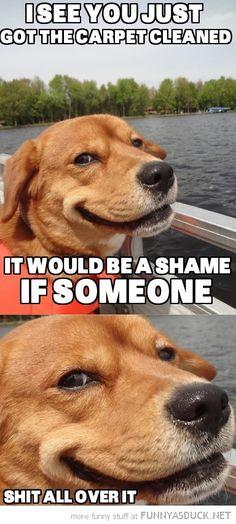 Devious Dog