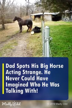 Dad Spots His Big Horse Acting Strange. He Never Could Have Imagined Who He Was Talking With! Funny Animal Memes, Funny Animal Videos, Funny Animal Pictures, Cute Funny Animals, Funny Dogs, Cute Dogs, Animal Funnies, Sports Pictures, Animal Pics