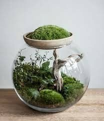 Make your own terrarium. These are thirty five cute terrariums you can make and use as decor anywhere in your home. Feed your design ideas now. Container Plants, Container Gardening, Succulents Garden, Planting Flowers, Terrarium Cactus, Bottle Terrarium, Plantas Bonsai, Bottle Garden, Cactus Y Suculentas