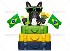 brazilian dog ...  airport, animal, background, bag, baggage, beverage, boxer, brazil, brazilian, bulldog, caipirinha, celebration, cheers, cocktail, cool, dog, drink, flight, french, funny, glass, holiday, humor, isolated, joke, journey, latin, latino, lime, luggage, packing, party, pet, pug, refreshment, shakers, south america, suitcase, summer, sunglasses, toast, tourist, travel, traveler, trip, tropical, vacation, white background