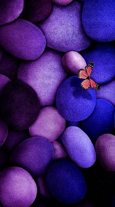 Butterfly Ringtones and Wallpapers - Free by ZEDGE™ Purple Butterfly Wallpaper, Flower Phone Wallpaper, Colorful Wallpaper, Galaxy Wallpaper, Blue Butterfly, Wallpaper Backgrounds, Fairy Wallpaper, Beautiful Flowers Wallpapers, Beautiful Nature Wallpaper