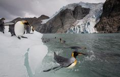 An amazing photo series of animals living at Earth's poles from Paul Souders