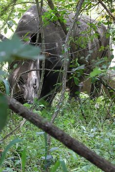 """There was little zoom on this shot. We were that close. Must admit that when it started to take a step towards us the only thought that ran through my mind was: """"How the h*ll am I going to explain to my wife that the rhino has our girls."""" Thankfully, the park guides were able to talk the rhino back a couple steps and we all carefully and quietly crept back to the jeep."""