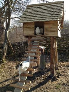 The new chicken house