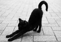 Downward Facing Dog #yoga #blackcatsrule
