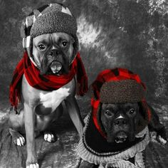 Boxer – Energetic and Funny Boxer And Baby, Boxer Love, Boxer Rescue, Friends Hanging Out, Dog Park, Mans Best Friend, Dog Stuff, Dog Treats, Puppy Love