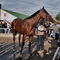 American Pharoah greets an adoring crowd outside his barn at #ChurchillDowns #kyderby2015 (Photo: @billfrakes for Sports Illustrated)  https://instagram.com/p/2OlIuHgUr5/?taken-by=sportsillustrated