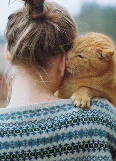 adorable cat and fair isle..