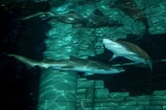 Come to #SEALIFEMN to experience our shark feeding!