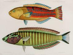 Bd. 4 (1873-1875) - Journal des Museum Godeffroy. - Biodiversity Heritage Library