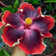 287 Mejores Imagenes De Flores Flores Bonitas Flores Exoticas Y