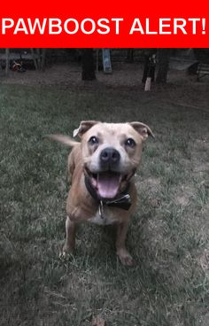 Is this your lost pet? Found in , NC 28078. Please spread the word so we can find the owner!  Caramel colored possible pit bull/boxer mix  Nearest Address: Overlook subdivision, Mt Island Lake area