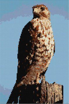hawk free pattern by Ann Logan