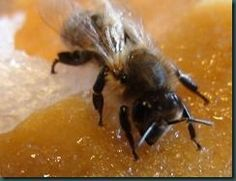 How to feed your bees during the cold winter months.