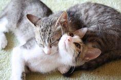 GatiLove #cats #kittens