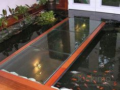 211 best fish in my floor images koi pond living room for Koi pond glass