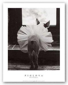 I feel pretty,  Oh, so pretty...     Piglova by David McEnery