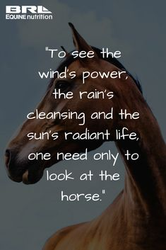"""""""To see the wind's power, the rain's cleansing and the sun's radiant life, one need only to look at the horse."""" #BRLEquine #equestrian #loveyourhorse brlequine.com"""