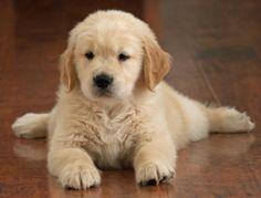 uyyy <3 bello ....cachorros tiernos - Buscar con Google