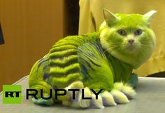 Russian Pet Groomers Create Dragon-Cat, Bee-Dog
