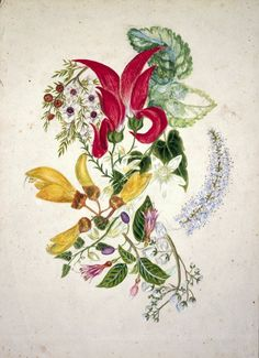 Featon, Sarah Ann 1847 or 1848-1927 :[Composite picture of flowers, New Zealand. ca 1890]    Reference Number: A-171-019    A group of native New Zealand flowers including koromiko (hebe), fuchsia excorticata, clematis, kaka beak, kowhai and manuka.