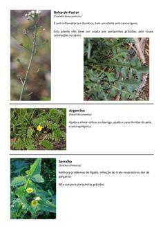 Lista de plantas e ervas comestíveis