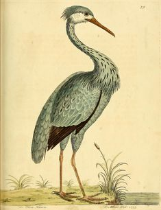 v. 3 - A natural history of birds : - Biodiversity Heritage Library