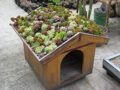 Caseta de perro con tejado de suculentas.
