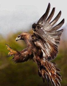 Native American Quotes About Eagles. Native American Images, Native American Wisdom, Native American Indians, The Eagles, Animals Of The World, Animals And Pets, Beautiful Birds, Animals Beautiful, Eagle Images