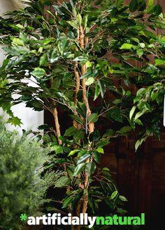 Nature, Plants, Inspiration, Decor, Biblical Inspiration, Naturaleza, Decoration, Plant, Decorating