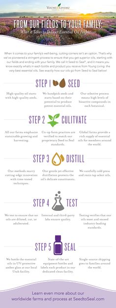 Young Living Essential Oils - Seed to Seal Promise ~ From our fields to your family: What it takes to deliver essential oil perfection. ~ infographic