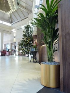 Interior plant display designed by Brid Brosnan welcomes hotel guests at D4 Hotel in Dublin.
