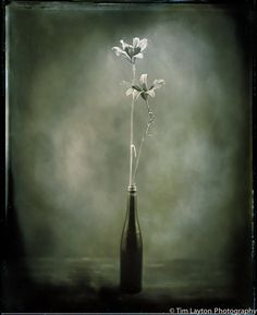 Missouri Orange Daylilies - 6/15/12 - Wet Plate Collodion by Tim Layton Sr., via Flickr
