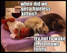 funny cats meme photo picture when did we get a hairless kitten it meows funny