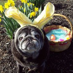 The Easter Bunny has work to do, and you're making him stop to pose for pictures?