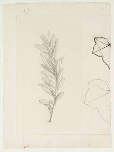 Ideas Olive Tree Drawing Ink For 2019 Birch Tree Tattoos, Olive Tree Tattoos, Willow Tree Tattoos, Pine Tree Tattoo, Palm Tree Tattoo Ankle, Tree Sleeve Tattoo, Leaf Outline, Tree Stencil, John Everett Millais