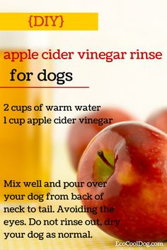 Using a apple cider vinegar rinse on your dog can help balance the ph level of the skin - DIY pet care Yorkies, Herbal Remedies, Natural Remedies, Flea Remedies, Natural Treatments, Dog Shampoo, Homemade Dog, Pet Health, Dog Care