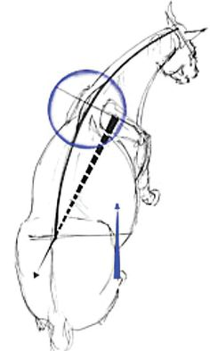 Why is the understanding of biomechanics so important in horses?