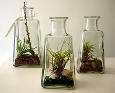The Fern and Mossery: Terrariums in Tequila bottles: a match made in hea...