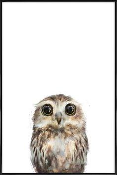 Little Owl - Amy Hamilton - Poster in kunststof lijst