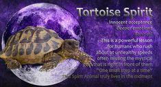 Power Animal, Spirit Guides, Spirit Animal, Tortoise, Mystic, In This Moment, Animals, Tortoise Turtle, Turtles