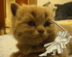 Décapitage de chat !