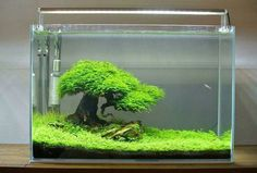 The first step to getting started with this hobby is the choice of aquarium and materials. We have briefly summarized what you need to do about this. 6 Steps İn Aquarium And Materials Selection, Aquascaping, Aquarium Aquascape, Betta Aquarium, Planted Aquarium, Aquarium Terrarium, Aquarium Landscape, Betta Fish Tank, Nature Aquarium, Home Aquarium