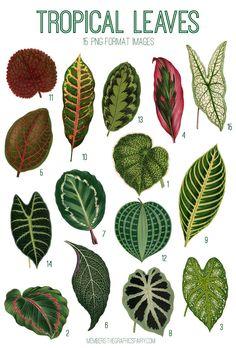 Motif Tropical, Tropical Leaves, Tropical Plants, Tropical Flowers, Botanical Art, Botanical Illustration, Garden Plants, Indoor Plants, Paper Plants