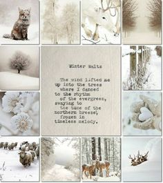 """Take photographs then: scrapbook your """"Winter"""" Collages, I Love Winter, Winter Is Coming, Winter White, Winter Christmas, Christmas Time, Images Murales, Color Collage, Winter Magic"""